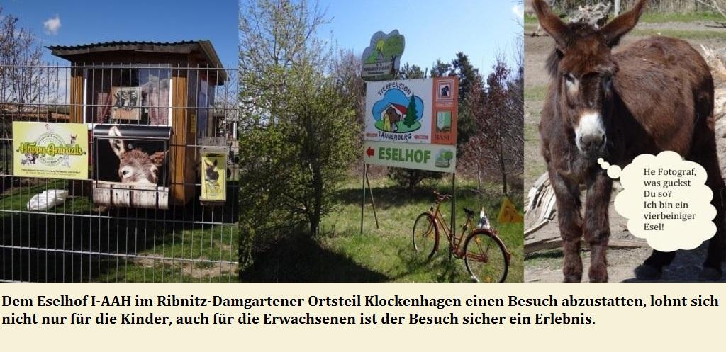 Dem Eselhof I-AAH im Ribnitz-Damgartener Ortsteil Klockenhagen einen Besuch abzustatten, lohnt sich nicht nur für die Kinder, auch für die Erwachsenen ist der Besuch sicher ein Erlebnis. - Fotos: Eckart Kreitlow