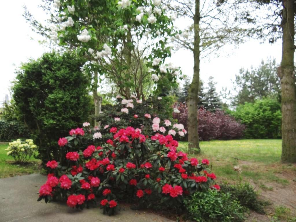 Farbenprächtige Blütengehölze und Blumenrabatten vor der Zimmervermietung Ferienhof Am Kiefernwald erfreuen die Sinne.