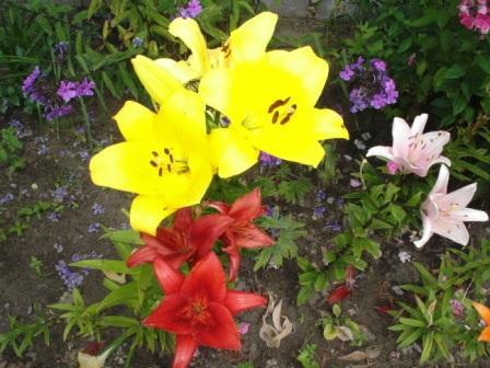 Farbenprächtige Blumenrabatten erfreuen die Sinne. Foto: Eckart Kreitlow