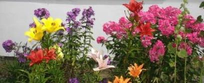 Farbenprächtige Blumenrabatten erfreuen die Sinne. Fotos: Eckart Kreitlow