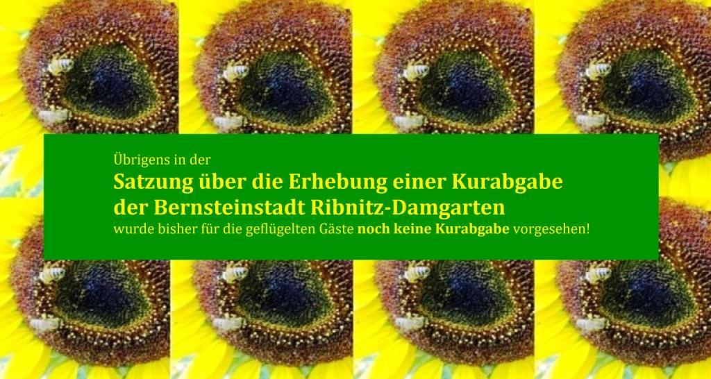 Die Wohlfühloase für Insekten am Ferienhof-Gästehaus 'Am Kiefernwald' Ribnitz-Damgarten. Auf den Sonnenblumen und den vielen weiteren Blühpflanzen tummeln sich die geflügelten Ferienhof-Gäste wie Bienen und Hummeln, aber auch Schmetterlinge und verschiedene Käfer. Übrigens in der Satzung der Bernsteinstadt Ribnitz-Damgarten über die Erhebung einer Kurabgabe wurde für die geflügelten Gäste keine Kurabgabe vorgesehen!